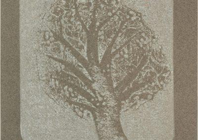 Goonbury Tree